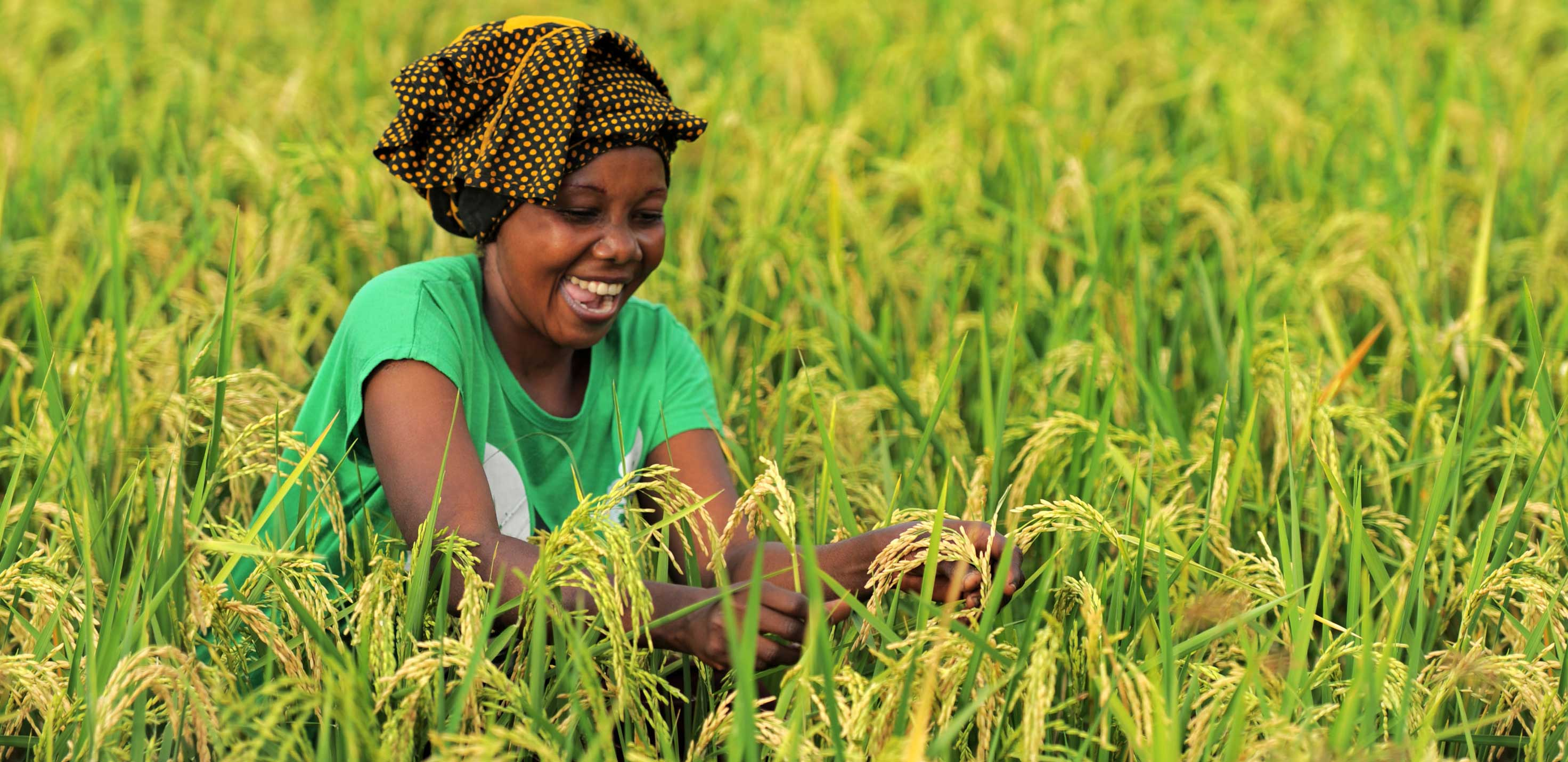 National Adaptation Plans: Building Climate Resilience in Agriculture